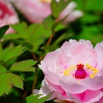 四季の花 夏