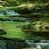 流緑 ~赤目四十八滝~