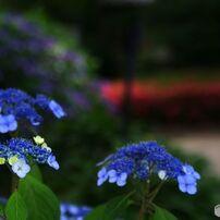 散って後までも花は花