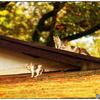 「屋根の上の幸せ」 小江戸川越散歩111