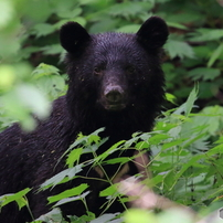日本産野生哺乳類の投稿20種への歩み