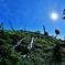 「台ケ原の原生林」