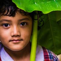 Organic Umbrella