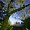 旧永山邸の夜桜