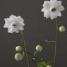 花 その13