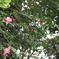 公園に咲く花(撮影:八田政樹)