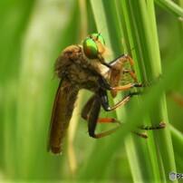 昆虫を見つめて・・