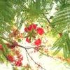 photo_598336