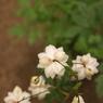 花 その14