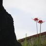 花 その15