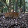 動じない鹿さん