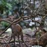 奈良公園: 驚かせてごめんね