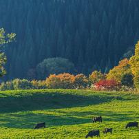 秋の森吉山