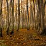 誘惑の森...