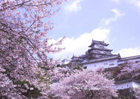 春の姫路城