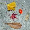 初冬の風物詩