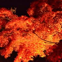 2016年 関西の紅葉