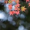 薬師池公園【薬師池の紅葉】②20161120
