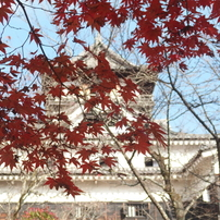 犬山城の秋