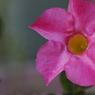 花 その16