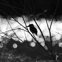 冬鳥の気持ち