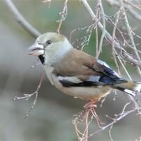 野辺の鳥2