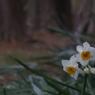 花 その17