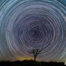 枯れ木に星を回しましょう。