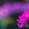 花 その20