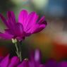 花 その21
