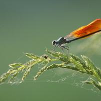 昆虫マクロ