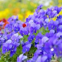 春を喜ぶ。