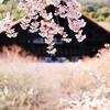 桜と美術館
