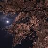 桜の季節2017その2