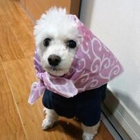 ドロボー犬リプシー