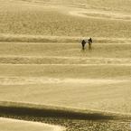 金色の海岸を歩く人