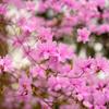 春へようこそ