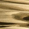 金色に輝く砂紋