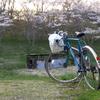 写真掌編:桜の下で 10:青春の乗り物