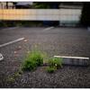 「見た目じゃわからない事」小江戸川越散歩121