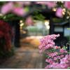 「初夏の頃」小江戸川越散歩122