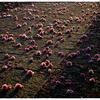 「春も過ぎたから」小江戸川越散歩123