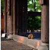 「これでいいのだ!」小江戸川越散歩124