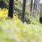 春色の銚子電鉄
