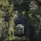 森のトンネルをゆく蛙