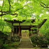京都・新緑