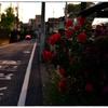 「かえり道」小江戸川越散歩131