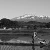 初夏の鳥海山