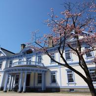 桜と豊平館