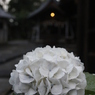 花 その31